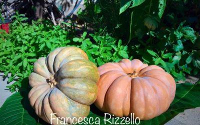 Non solo una decorazione per Halloween: la zucca e le sue proprietà